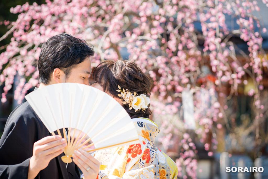 長岡天満宮の梅の前で扇子を広げて顔の一部を隠した和装姿の新郎新婦
