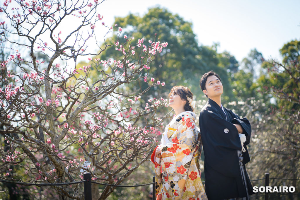 長岡天満宮の梅の横で背中合わせで上を見上げる和装姿の新郎新婦